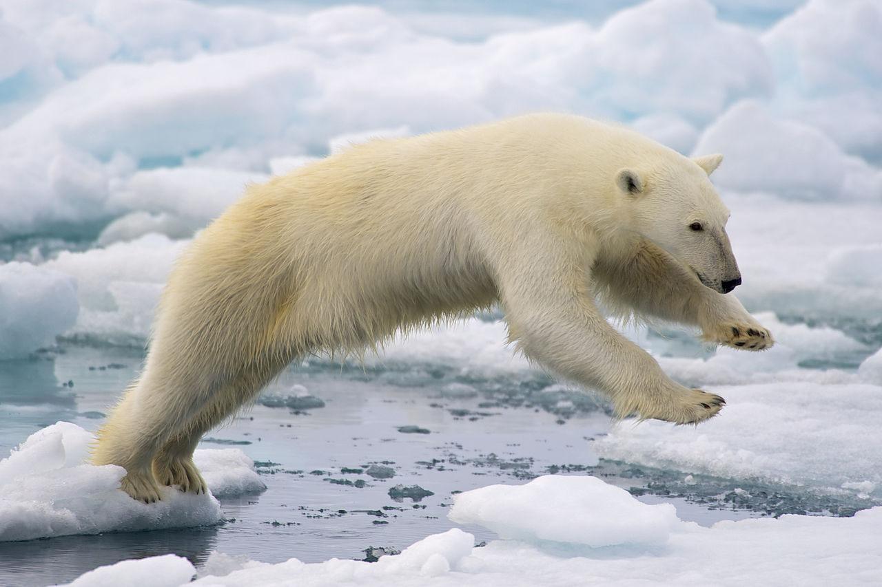 Il était une fois l'Arctique – Diffusion France 3 Thalassa, le 23 janvier 2015 à 20h45